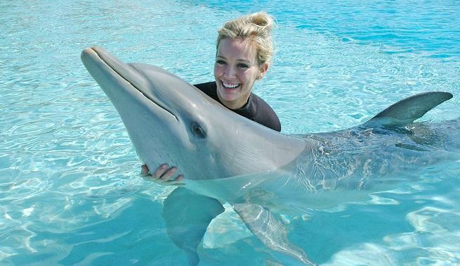 Bahamas Dolphins